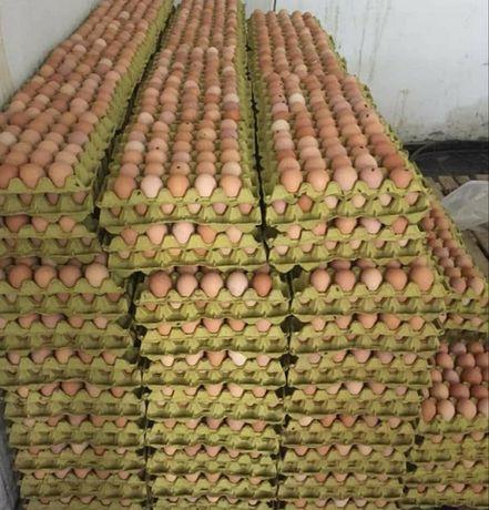 Инкубационные яйца с Европы и Украины