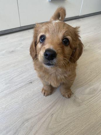 Tenho essa cadelinha pra doar