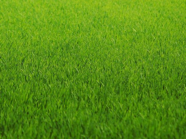 РАСПРОДАЖА Газонная трава семена от 75 грн/кг