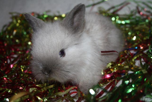 Крольчата миники из питомника уже в продаже
