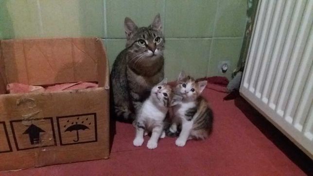 Котята  трехцветные