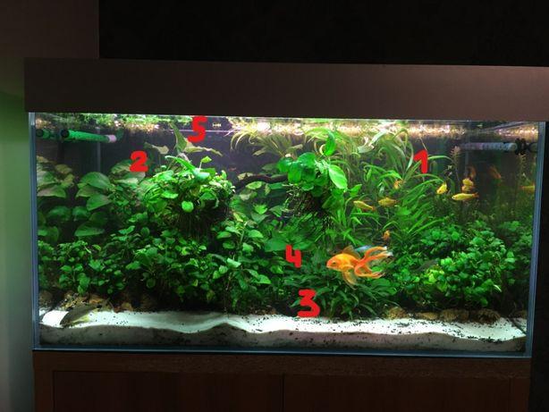 Rośliny akwariowe 2 i 3 plan