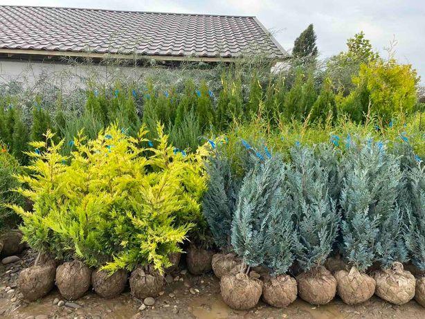 Растения для торговой площадки садовый центр опт розница доставка НП