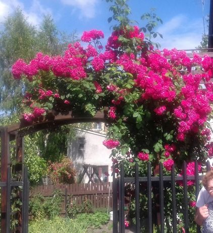 Piękny ogród Obornik od gołębi
