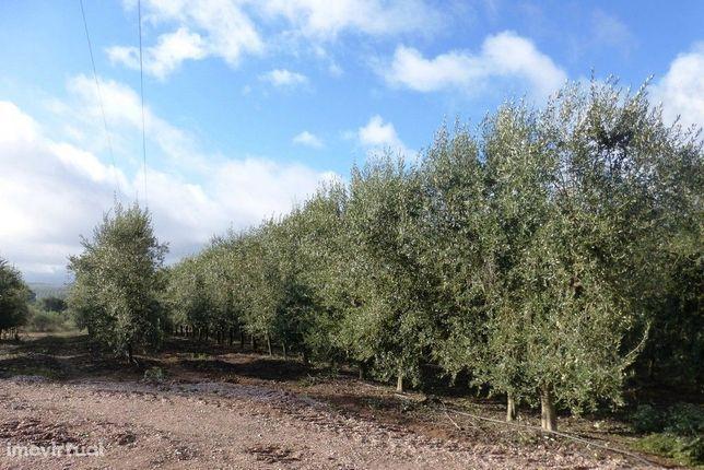 Propriedade de 121 ha OLIVAL e AMENDOAL. Portugal, Vila Real, Valpa...