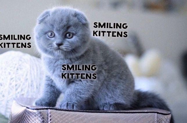 Самые добрые котята в Мире