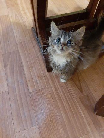 Котик ( хлопчик)  4 місяці  віддам