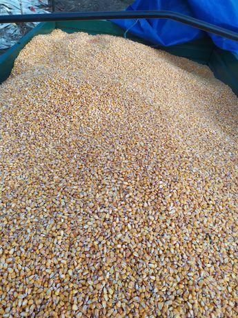 Кукурудза на зерно