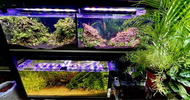 OŚWIETLENIE Lampy Belki LED Akwarystyczne na KAŻDE Akwarium BIOTOP