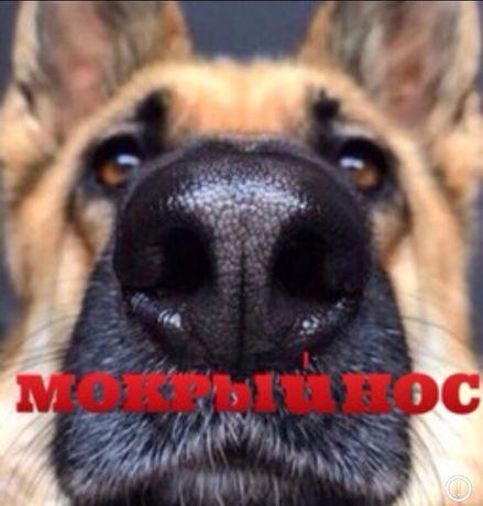 Мокрий ніс, ветеринарний кабінет. ветеринар, ветеринарний врач