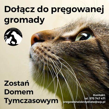 Domy Tymczasowe dla kotów poszukiwane