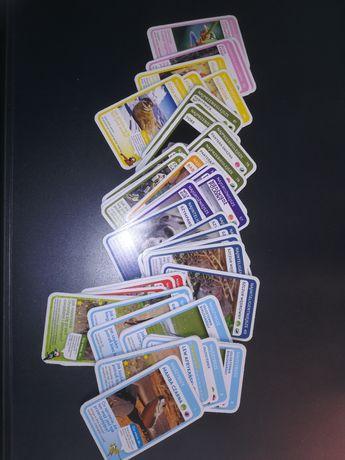 Super zwierzaki karty