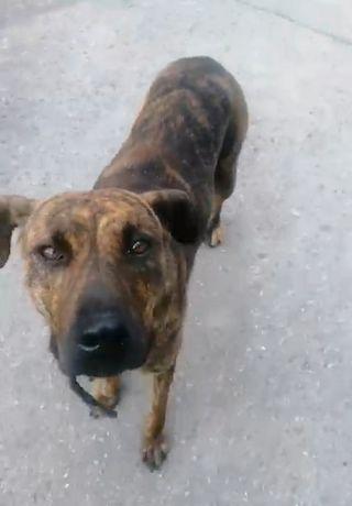 Пропала замечена собака Пески