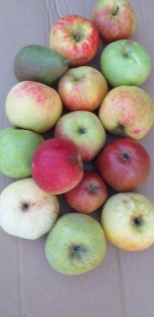 Stare odmiany jabłek z własnego sadu
