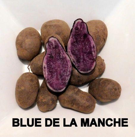 Blue De La Manche - fioletowe / niebieskie ziemniaki rarytas, zdrowe