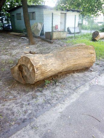 дерево бу