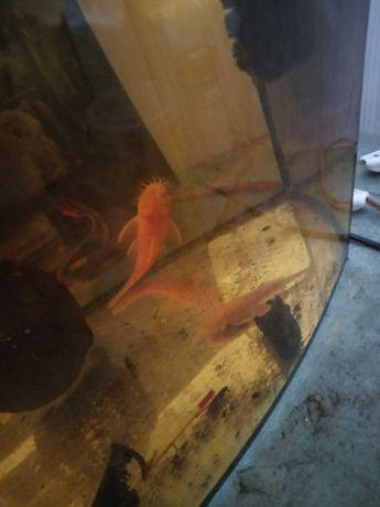 Tanio akwaria z osprzętem i rybami.
