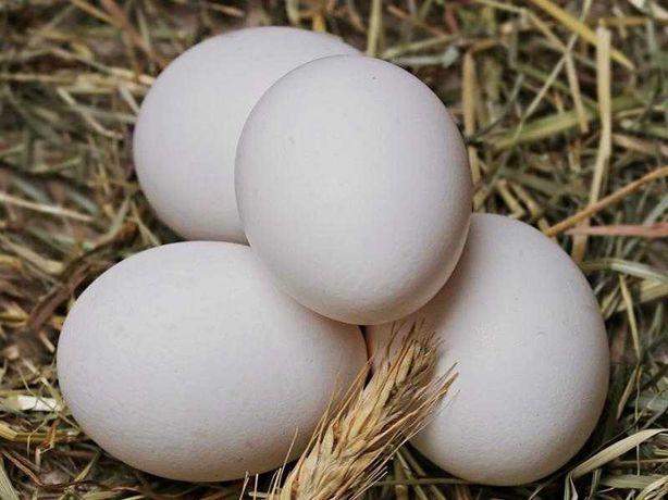 Sprzedam jajka wiejskie.