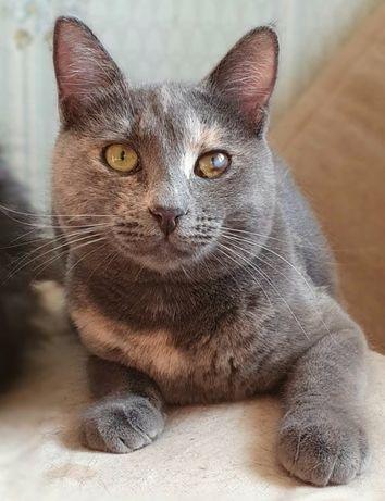 Киви 8 мес стерильная. Котики, котята, кошечка, кот