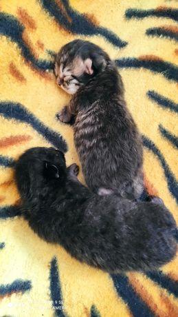 Котятки( для предварительного бронирования)