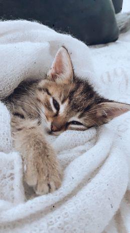 Śliczny kot karmel.