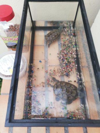 2 tartarugas com aquário e comida
