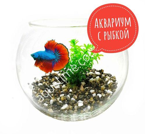 Живой подарок | Аквариум с рыбкой |  Бесплатная доставка!!!