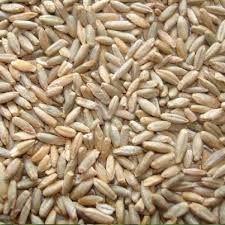Жито продам