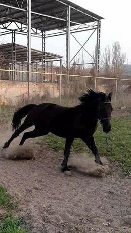 Постой для лошадей и пони