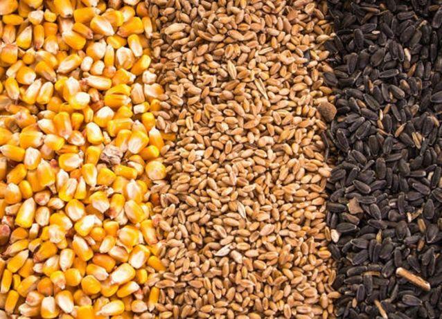 семечку  подсолнечника глютен кукурузный шрот рапсовый