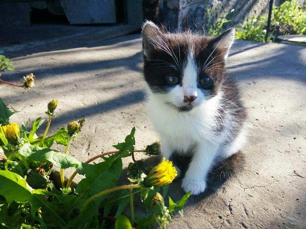 Котята  котенок  смотрите все фото!!