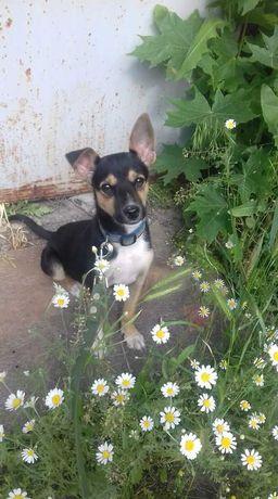 Красивый щенок-Тоша ищет дом!