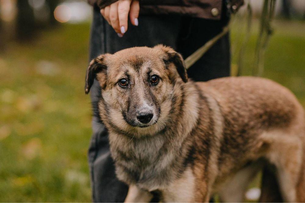 Срочно , щенок уедет в приют (девочка , 7 мес)стерилизована , привита