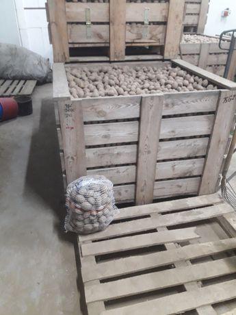 Sadzeniaki ziemniaki irga