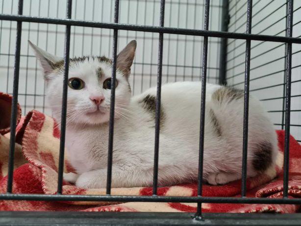 Myszków ul. Skłodowskiej znaleziono kotkę! Szukamy właściciela!