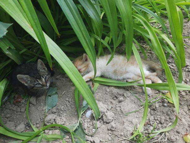 Oddam 5 małych kotków w dobre rece