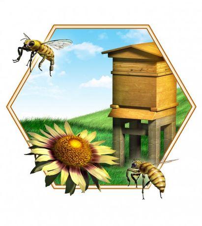Пасіка бджоли вулики
