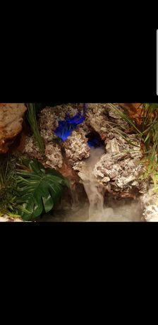 Terrarium dla gekona, agamy, kameleona od LuckyTerra.