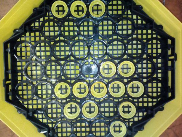Pierścienie do inkubatora cleo 5