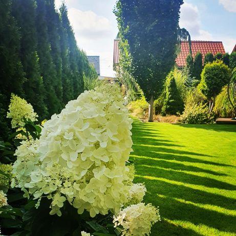 Ogrody, trawniki, nawadnianie, roboty koszące! Zadzwoń lub napisz :)