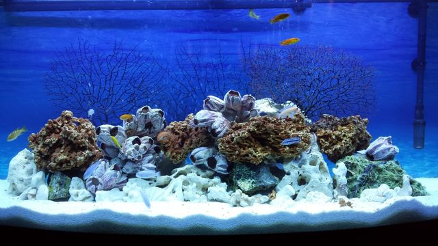 Akwarium Juwel Vision 260- zestaw