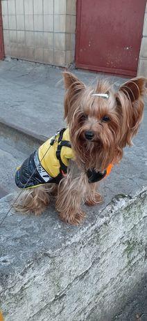 Куртка, комбинезон, жилетка для собак