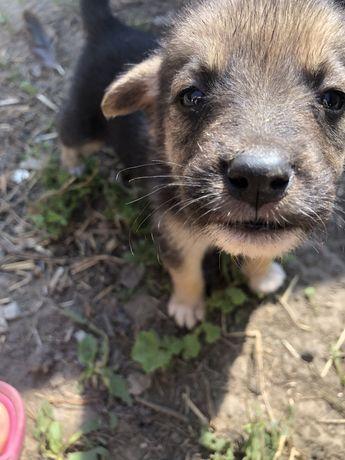 Віддам в добрі руки собачок