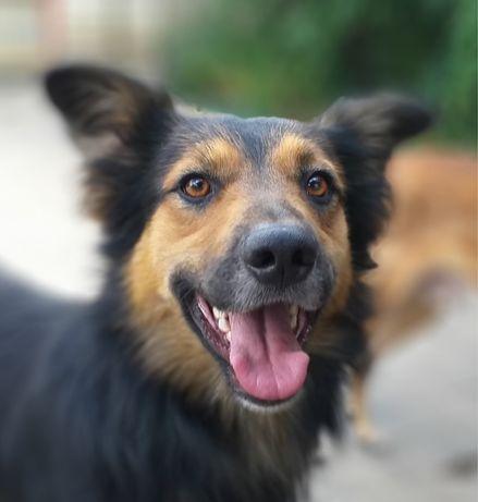 Собака пёс / собачка песик метис шукає дім / в добрі руки