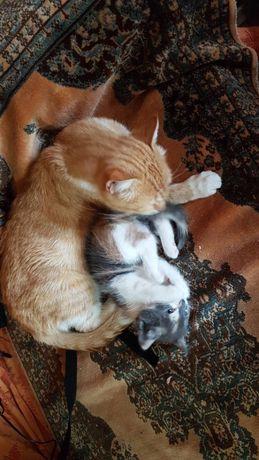 Кошечка рыжая и трехмастная