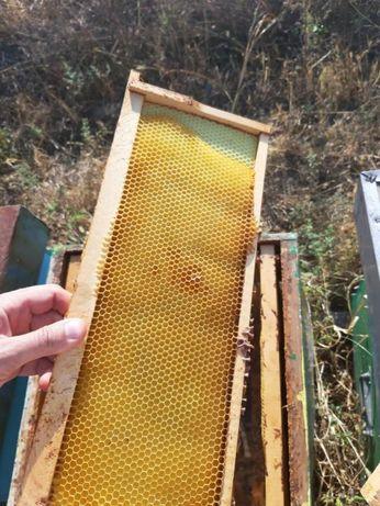 Бджолопакети, матки Украинская степовая Доставка в Ковель! 2021