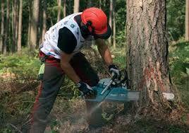 wycinki drzew i przycinanie