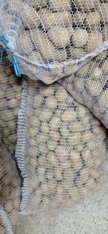Ziemniaki wielkości sadzeniak Irys Denar