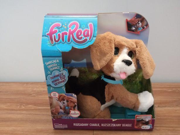 Piesek interaktywny Charlie Rozszczekany Beagle Hasbro Fur Real