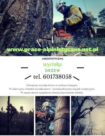 Wycinka, pielęgnacja drzew, usuwanie korzeni Alpiniści Śląsk/Katowice